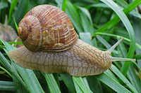 Gugumuck's snail farm in Vienna(Michaela Urban)