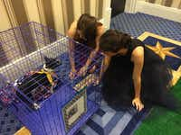 The Humane Society of Tulsa brought Texas puppies to the ball. (Jordan Rudner/staff)(staff)