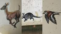 A doe, armadillo and bird have appeared near the Keller Town Center and the city is trying to reach out to the artist. ((City of Keller/KXAS-TV (NBC5)))