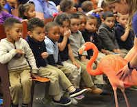 Dallas Zoo outreach specialist Ryanne Hanley allows students to get an up close view of a flamingo from the Dallas Zoo during a program at Gilbert Cuellar Sr. Elementary School in Dallas on Friday, January 20, 2017. (Louis DeLuca/The Dallas Morning News)