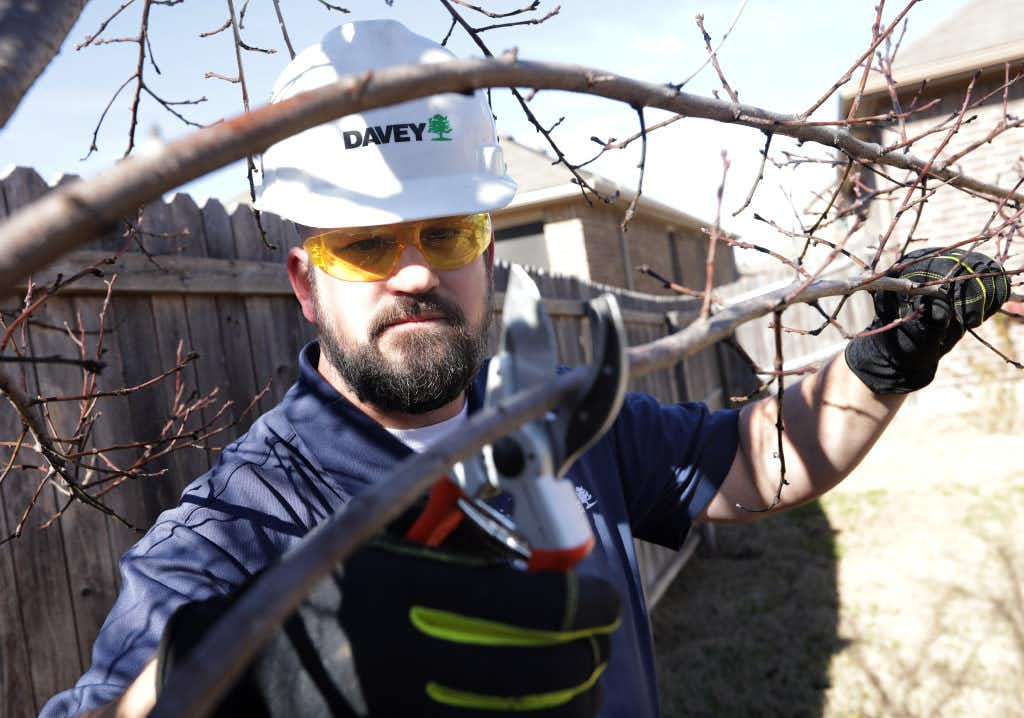 How to prune your fruit trees now for a summer bumper crop