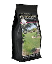 Native American Seed sells a mix of native grasses called Thunder Turf.