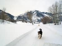 Hike and enjoy all kinds of snow activities in Ogden Valley. During Bailey's Sleigh Rides, Eugene Bailey's dogs like to romp after the sleigh. ((Robin Soslow))
