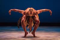 Dallas Black Dance Theatre company member Keon K. Nickie performs the seminal African-American work, <i>Awassa Astrige/Ostrich</i>, during a dress rehearsal at the Dee and Charles Wyly Theatre on Thursday, Feb. 16, 2017. (Rex C. Curry/Special Contributor)(Special Contributor)