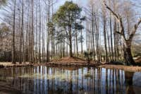 Avery Island in Louisiana is home to McIlhenny Company, the makers of Tabasco. The company is now part of a group defending the House GOP's plan -- border adjustments and all. (Sara Essex Bradley/The New York Times)
