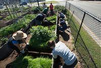 Eight members of the Deep Ellum community work to repair one of the raised beds at Deep Ellum Urban Gardens on Canton Street in Dallas. ((Robert Hart/Special Contributor))