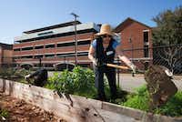 Deep Ellum Urban Gardens member Paula Dohanian works in one of the raised beds.((Robert Hart/Special Contributor))