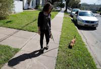 Audrey walks Gracie before going to work in Waco. (Vernon Bryant/Staff Photographer)