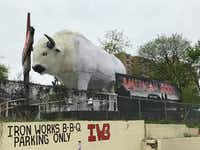 A giant white buffalo glared at conference attendees who walked by. It became a popular photo op at SXSW.((Melissa Repko/The Dallas Morning News))