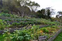 Stanford Inn organic gardens(Cheryl Ng Collett)