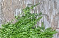 Fresh dandelion leaves((Ellise Pierce))