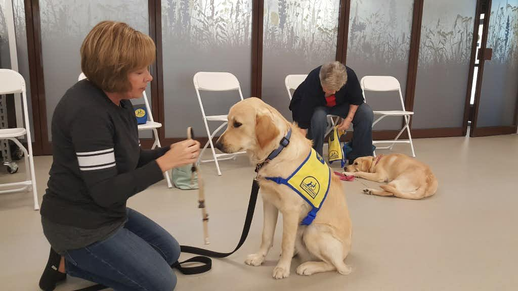 On National Puppy Day, watch as pups prepare to become service dogs