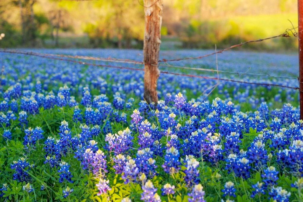 See The State S Best Spring Colors At These 5 Texas Flower Festivals