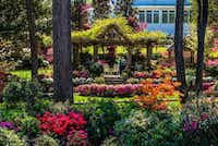 Historic homes and public spaces are on display during  Tyler's annual Azalea and Spring Flower Trail. ((Ronald Rang))