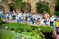 Families search for frogs in the wetland pond at the Lady Bird Johnson Wildflower Center. ((Jim Turner))