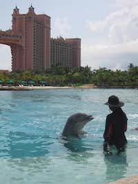 A dolphin and trainer work in a pool at the Atlantis Paradise Island Resort in the Bahamas. ((MCT))