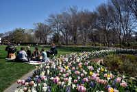 A family has a picnic along aside a bed of flowers containing foxglove, pansy, hyacinth, tulips, viola and narcissus during the Dallas Blooms: Peace, Love and Flower Power at the Dallas Arboretum. (Ben Torres/Special Contributor)