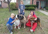 The rescued shepherd renamed Lt. Dan, far right, is shown with his new family in Little Elm. The family includes twins Brodie Lindstrom (kneeling) and Braedon Lindstrom, their mom, Kelly Lindstrom, along with smooth-coated collie Jack, the mastiff Beast and the Chihuahua named Pico.(Courtesy Kelly Lindstrom)