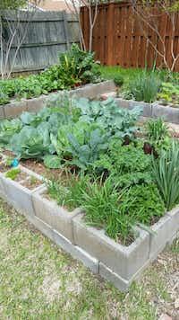 Organic raised bed garden in Dallas on cinder blocks(Reader photo)