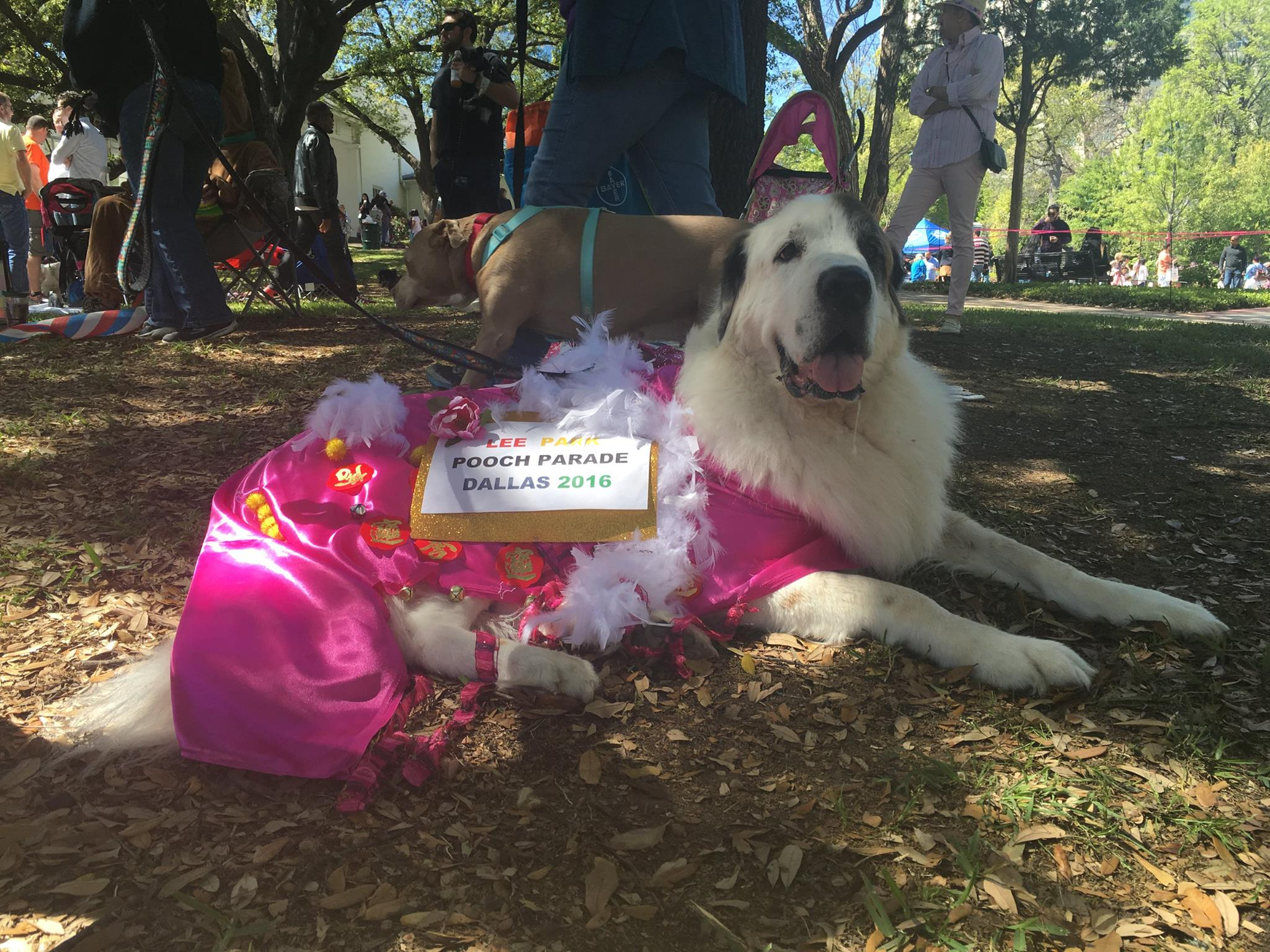 Dog About Town: Easter parading and more things to do with your ...