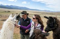 Wild Earth Llama Adventures in Taos (New Mexico Tourism Department)