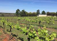 The vineyards at Kiepersol Estate Vineyard and Winery, Tyler(Tina Danze)