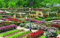 New plantings this year at the famous Tyler Rose Garden will bloom later this spring. (Tyler Conv & Visitors Bureau)