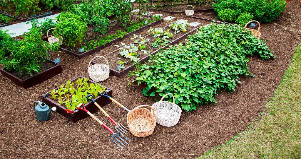 White House kitchen garden will live on during Trump administration ...