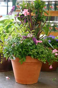 Why a plant container masterpiece can be much better than a bouquet gardening dallas news - P allen smith container gardens ...