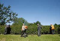 Workers from Precision Landscape Management trim up the entryway to a neighborhood in Lake Forest in Dallas on May 4, 2017. The company uses workers on H-2B visas to help meet its peak season demand.. (Nathan Hunsinger/The Dallas Morning News)