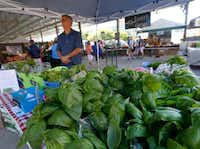 Steve Elliott of Elliott Grows waits for customers early Saturday morning, May 6, in The Shed at the Dallas Farmers Market. In the foreground is Genovese basil, which along with lettuce and greens are grown hydroponically in Aubrey, Texas. (Ron Baselice/Staff Photographer)