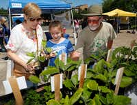 From left, Lori Martinez, Lola Martinez,10, and Don Lambert, from Gardeners in Community Development, discuss what plants are available at the Gardeners in Community Development booth at the White Rock Lake Farmers Market.(Ron Baselice/Staff Photographer)