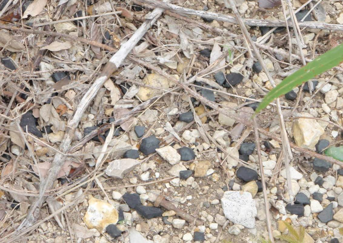 These black chunks from used batteries litter the ground near the old Exide Technologies plant in Frisco.(Texas Commission on Environmental Quality)