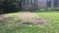 Revive Lawn S Dead Spots The Natural Way Gardening