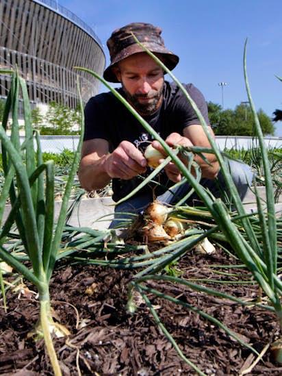 Big Tex Urban Farms Is The Backbone Of A Budding Southern Dallas - Farm to table dallas