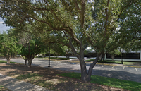 Live oak trees along Forest Lane in North Dallas before they were cut back by the property owner. (Google Maps)