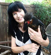 Kimberly Atchley with Tina Turner, a Polish chicken, in the backyard of her Richardson home.(Ron Baselice/Staff Photographer)