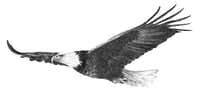 DD Dowden's illustrations are just one of the highlights of<i>The Wonder of Birds</i>by Jim Robbins.(DD Dowden)