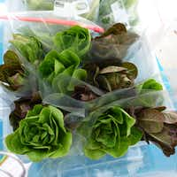 "<p><span style=""font-size: 1em; background-color: transparent;"">DFW Aquaponics Farms from Burleson sells it root-on baby romaine heads at Grand Prairie Farmers Market.</span></p>(Kim Pierce)"