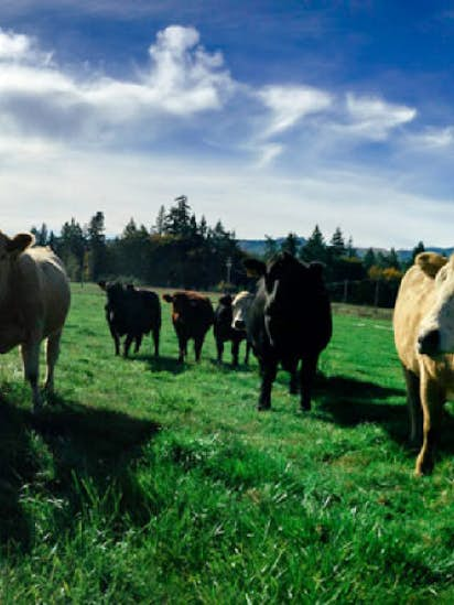 Grassfed Beef Crowdfunding Startup Is The Farmers Market Meets The - Farm to table dallas
