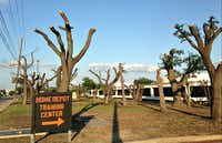 Decapitated trees found near Forest Lane, Dallas.(Robert Wilonsky/The Dallas Morning News)