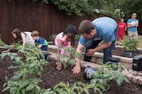 Austin Street Center's Daniel Roby (right) helps his daughter, Banner, plant seedings after the dedication ceremony of the center's New Hope Garden in Dallas.(Rex C. Curry/Special Contributor)