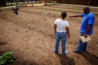 Horticulture specialist Tyrone Day directs women from the Austin Street Center's Sisterhood program as they work in the New Hope Garden.(Smiley N. Pool/Staff Photographer)