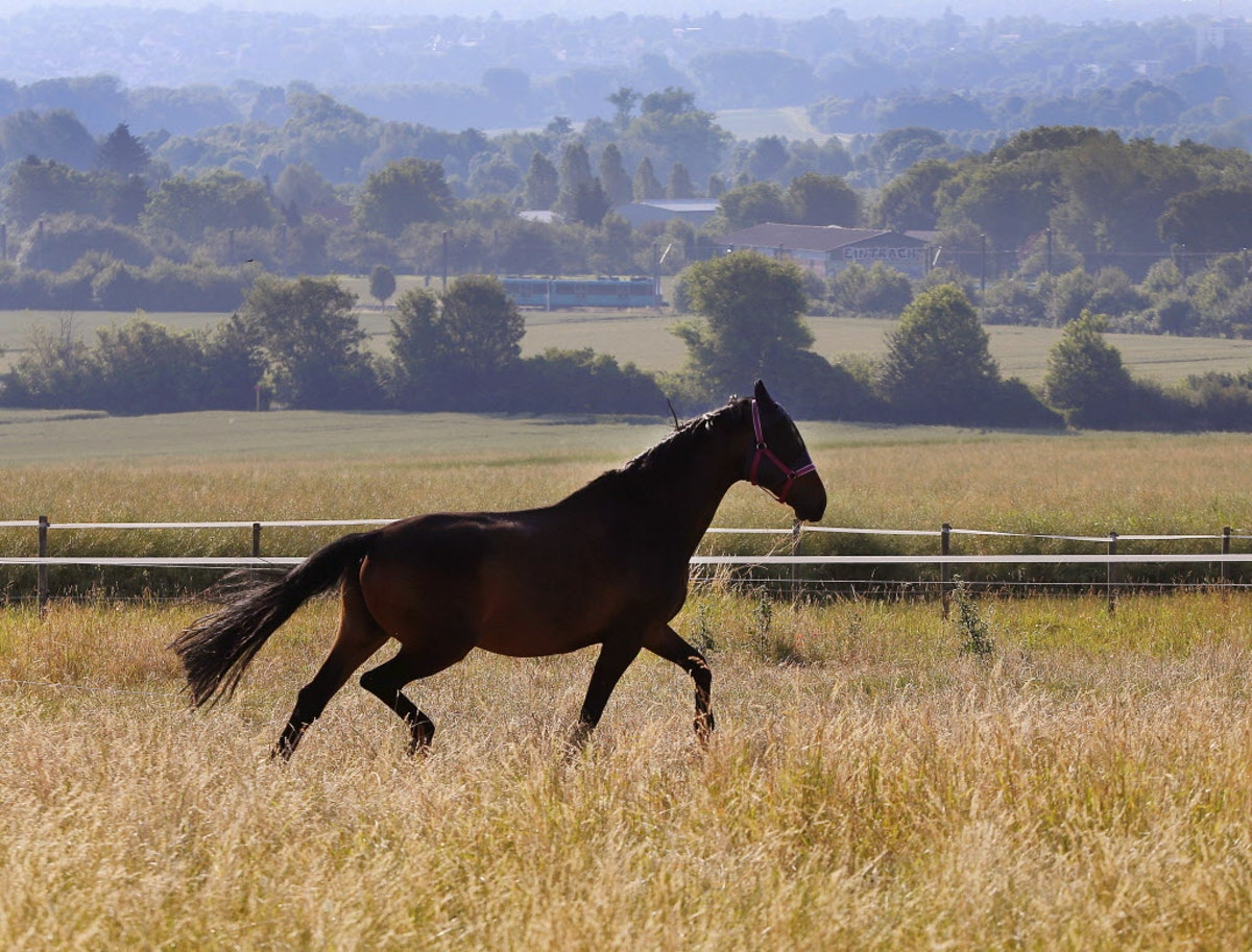 Horse meat ban praised by animal activists but its only temporary