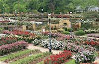 Tyler Municipal Rose Garden(Visit Tyler)