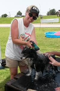 "<br>(<p><span style=""font-size: 1em; background-color: transparent;""></span></p><p>DFW Pug Rescue volunteers will wash dogs for donations at Marshall Grain's annual Pooch Pool Party. (<span style=""font-size: 1em; background-color: transparent;"">Joyce Connelly)</span></p><p></p><br><p></p><p></p>)"