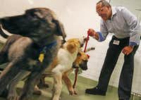 New Dallas City Council member Kevin Felder visits with some puppies as he stops by the Dallas Animal Services shelter to talk about his possible pilot program to train homeless people to catch and train dogs, photographed on Wednesday, July 19, 2017. (Louis DeLuca/The Dallas Morning News)(Louis DeLuca/Staff Photographer)