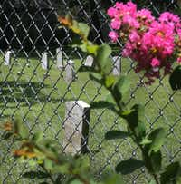 "<p></p><p>Fifty-five  Confederate soldiers are buried in a <span style=""font-size: 1em; background-color: transparent;"">cemetery at 4225 Electra St. in Dallas.</span></p><p></p>(Louis DeLuca/Staff Photographer)"