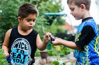 Amir Shamshiri (left), 5, shares a clipping with James Kelly Martin, 4, as preschool students touch, smell and harvest herbs in the garden behind The Orchard School on Independence Way in Plano. Parents banded together to buy and license the school after its corporate owner, KinderCare, shut it down.(Ashley Landis/Staff Photographer)