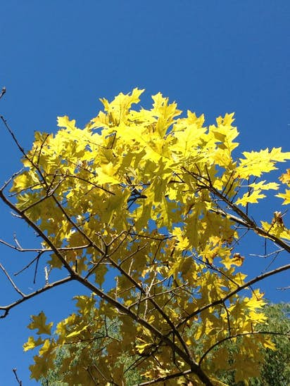 How To Combat Yellowing Leaves On Your Landscape Trees Gardening